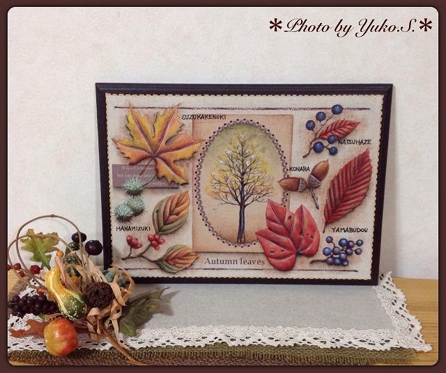 コレクションシリーズ 「落葉樹コレクション」